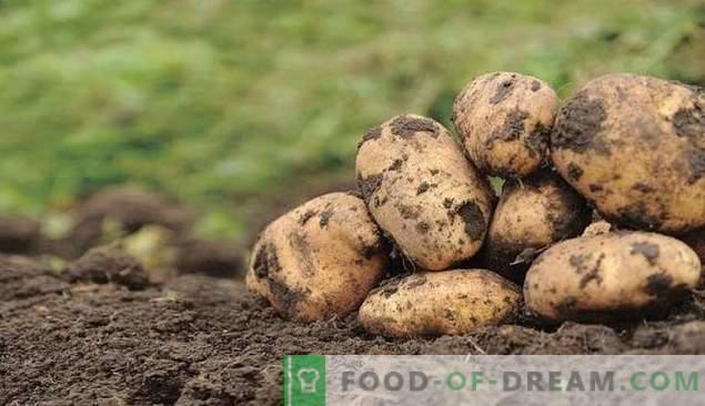 Sorgen Sie für Kartoffelschutz!