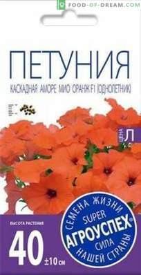 Überblick über Amore Mio, eine Kaskaden-Petunie aus Agrousp, Beschreibung und Empfehlungen für ...
