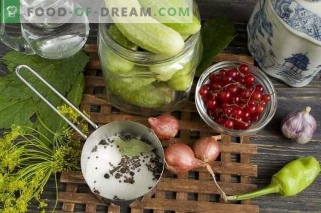 Gewürzgurken mit roten Johannisbeeren und Zwiebeln