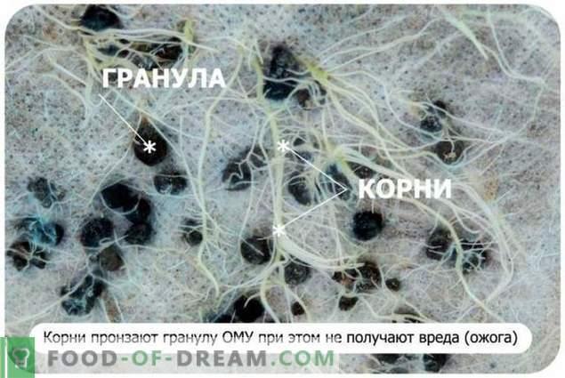 Was ist organischer Dünger - ist verantwortlicher Spezialist
