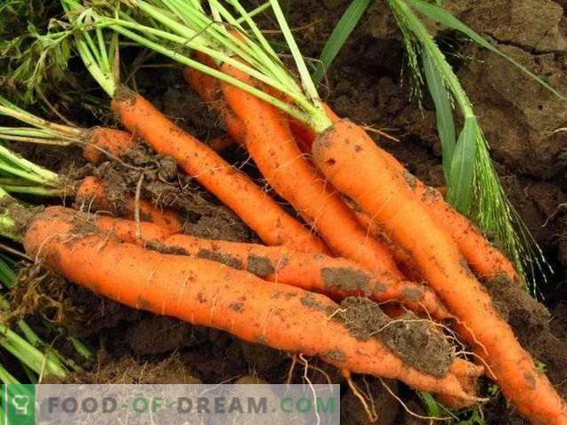 Nützliche Eigenschaften von Karotten