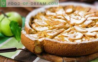 Gentle charlotte with sour cream and apples is a delicacy of the whole family. How to make a charlotte with sour cream and apples from dry bread