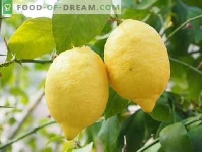 Zitronen: Nutzen und Schaden