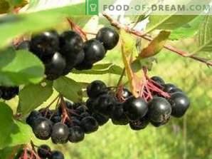 Trocknen von schwarzen Apfelbeeren
